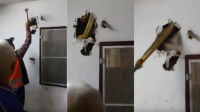 Video: Sacaron una enorme pitón de la pared de una casa